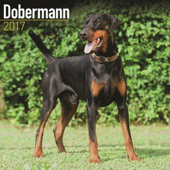 Kalender 2017 Dobermann