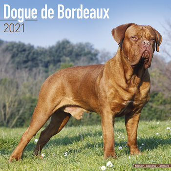 Dogue de Bordeaux Kalender 2021