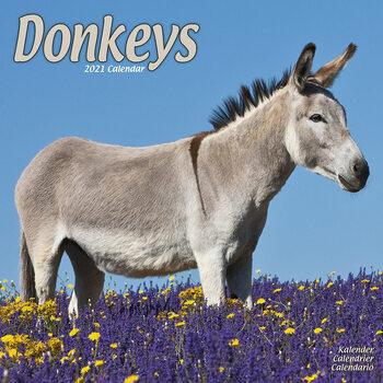 Kalender 2021 Donkeys