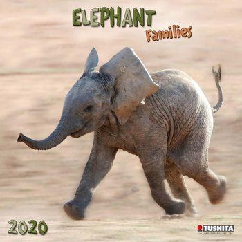 Kalender 2020  Elephant Families