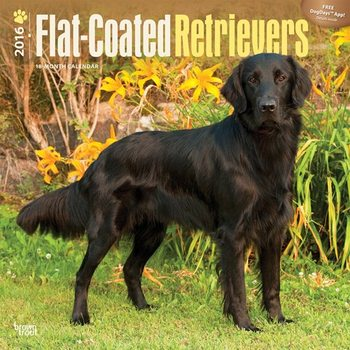 Flatcoated retriever Kalender 2017