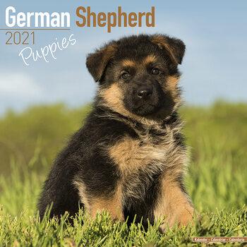 German Shepherd Kalender 2021
