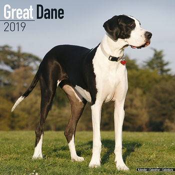 Great Dane Kalender 2019