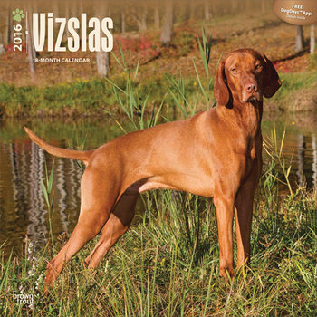 Kalender 2021 Kurzhaariger Ungarischer Vorstehhund