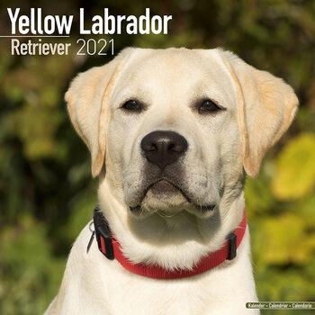 Kalender 2021 Labrador Ret (Yellow)