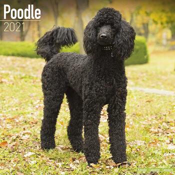 Kalender 2021 Poodle