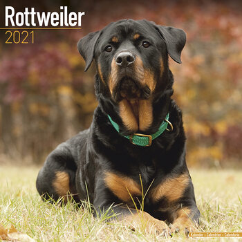 Kalender 2021 Rottweiler