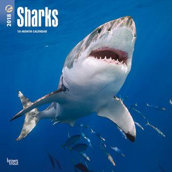 Kalender 2018 Sharks