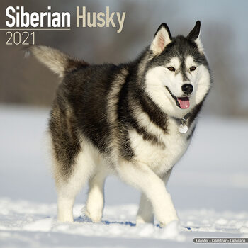 Kalender 2021- Siberian Husky
