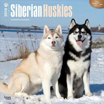 Siberische husky Kalender 2017
