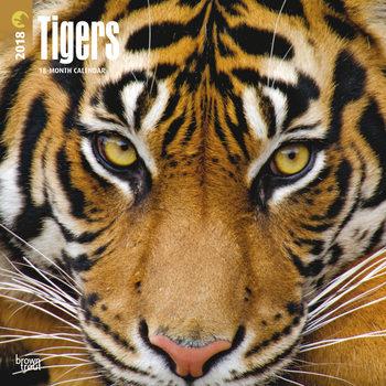 Tigers Kalender 2018