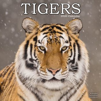 Kalender 2021 Tigers