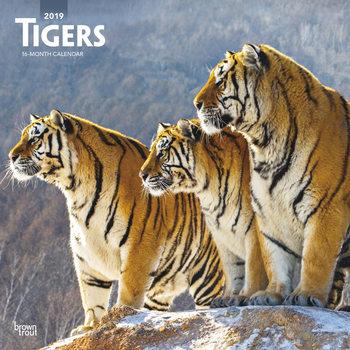 Tijgers Kalender 2019