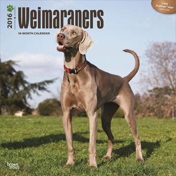 Weimarse staande hond Kalender 2017