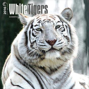 Kalender 2021 Weißen Tiger