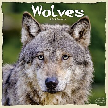 Kalender 2022 Wolves