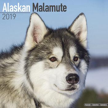 Alaskan Malamute Kalender 2021