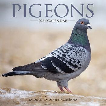 Pigeons Kalender 2021