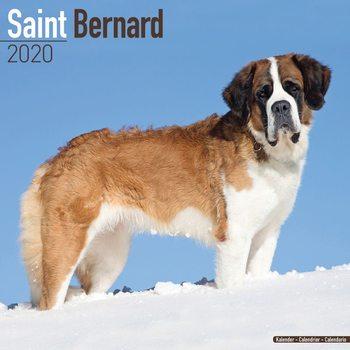 St Bernard Kalender 2021