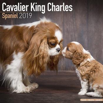 Cavalier King Charles Kalender 2019