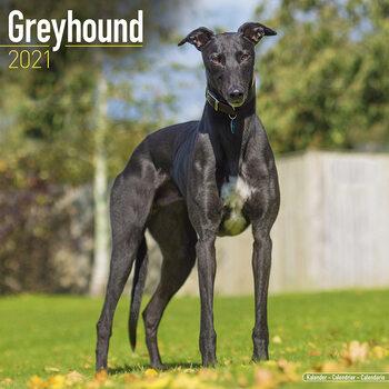 Greyhound Kalender 2021