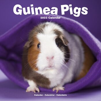 Guinea Pigs Kalender 2022