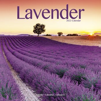 Lavender Kalender 2022
