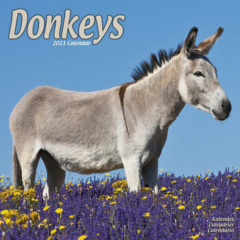 Donkeys Koledar 2021