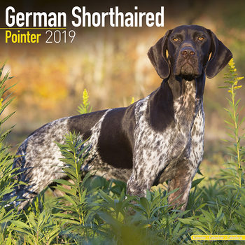 German ShortHair Pointer Koledar 2019