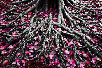 Kunst op glas Pink World - Pink Roots