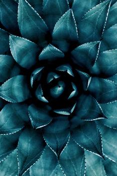 Kunstfotografier Cactus No 9