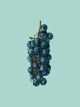 Illustrasjon grapes