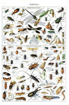 Illustration of  useful Insects and insect pests c.1923 Kunsttrykk