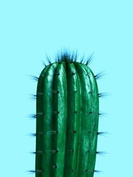 Illustrasjon cactus1