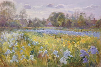 Iris Field in the Evening Light, 1993 Kunsttrykk