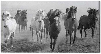 Billede på lærred Carys Jones - Dusty Plains