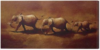 Billede på lærred Jonathan Sanders  - Three African Elephants
