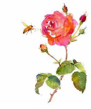 Billede på lærred Rose with bee, 2014,