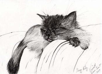 Billede på lærred Sleepy Baby, 2013,