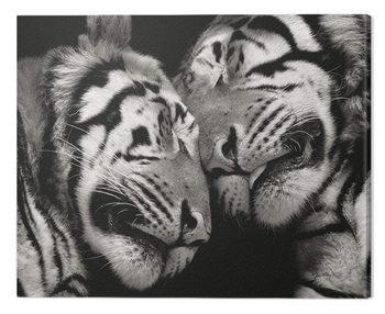 Marina Cano - Sleeping Tigers Billede på lærred