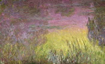 Waterlilies at Sunset, 1915-26 (oil on canvas) Billede på lærred