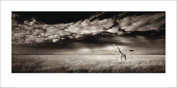 Reproducción de arte Ian Cumming  - Masai Mara Giraffe
