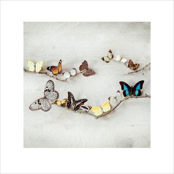 Reproducción de arte Ian Winstanley - Array of Butterflies