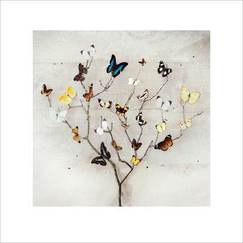 Reproducción de arte Ian Winstanley - Tree of Butterflies