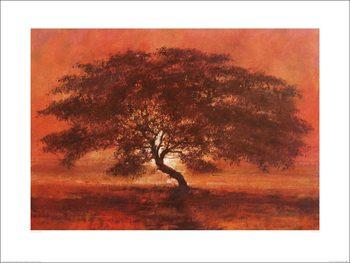 Reproducción de arte Jonathan Sanders - Desert Tree