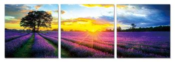 Lavender Field Modern tavla