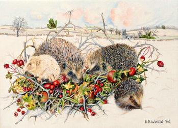Leinwand Poster Hedgehogs in Hedgerow Basket, 1996