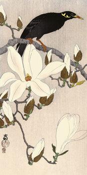 Leinwand Poster Ohara Koson - Myna on Magnolia Branch