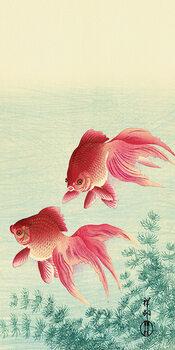 Leinwand Poster Ohara Koson - Two Veil Goldfish