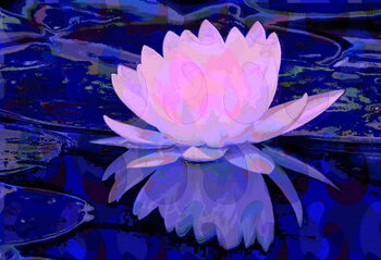 Leinwand Poster Pink Water Lily